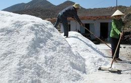 Khánh Hòa: Tồn đọng 40.000 tấn muối