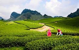 Kế hoạch dài hạn phát triển ngành du lịch Mộc Châu