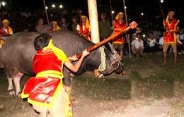 Loại bỏ nghi lễ phản cảm trong Lễ hội Cầu trâu Phú Thọ