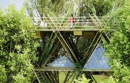 Mê mẩn những ngôi nhà cây độc đáo nhất thế giới