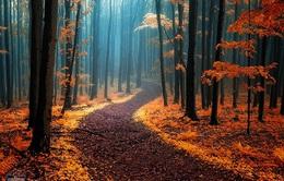 """""""Nghẹt thở"""" trước hình ảnh những con đường đẹp nhất thế giới"""