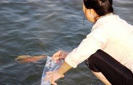 Người dân nô nức thả cá chép tiễn ông Táo về trời