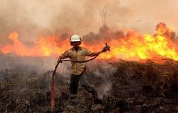 Indonesia phát triển hệ thống kênh rạch kiểm soát cháy rừng