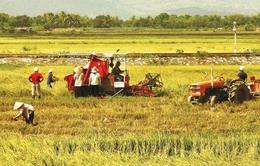 Nông nghiệp, nông thôn chưa tạo lực hút đối với doanh nghiệp