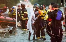 Bão Joaquin đổ bộ, Đông Nam nước Mỹ ngập trong biển nước