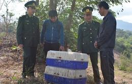 Quảng Trị: Bắt gần 1 tấn gà thịt nhập lậu