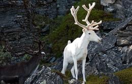 """Những con vật """"lạc loài"""" nổi bật giữa thiên nhiên"""