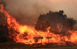 Cháy rừng trên diện rộng tại Tây Ban Nha