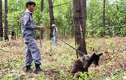 Quảng Trị: Chó nghiệp vụ hỗ trợ rà phá bom mìn