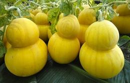 Giáp Tết: Loạn giá thị trường hoa quả độc, lạ
