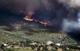 Cháy rừng dữ dội, Hy Lạp kêu gọi EU trợ giúp dập lửa