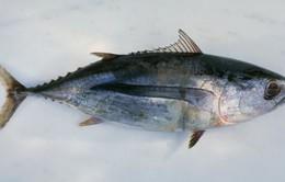 1/3 cá tại các nhà hàng ở Brussels, Bỉ là cá 'lởm'