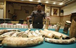 Thái Lan bắt giữ nhóm buôn lậu ngà voi xuyên biên giới