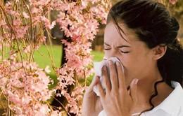 Cách phòng tránh viêm mũi dị ứng