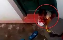 Lạng Sơn: Buộc thôi việc một cô giáo trong vụ để trẻ mầm non phải ăn rác