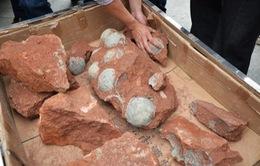 Trung Quốc: Phát hiện hàng chục quả trứng khủng long hóa thạch