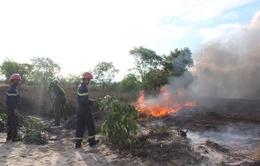 Quảng Bình: Đã dập tắt được vụ cháy rừng ven biển