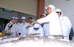 Xuất khẩu 7 con cá ngừ đại dương sang Nhật Bản