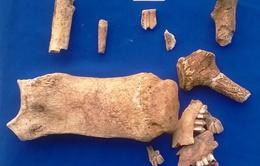 Hà Tĩnh: Phát hiện nhiều xương động vật thời tiền sử