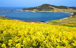 Thiên nhiên tươi đẹp ở đảo Cheongsando Hàn Quốc