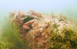 Ngỡ ngàng khu rừng 10.000 năm tuổi dưới đáy đại dương