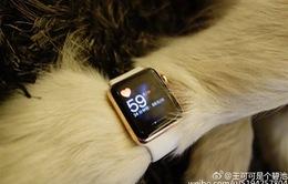 Đại thiếu gia Trung Quốc sắm Apple Watch Edition cho... thú cưng
