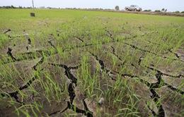 Thái Lan hứng chịu hạn hán tồi tệ nhất trong vòng 1 thập kỷ qua