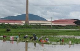 Bắc Giang: Hơn 6.000 ha hoa màu thiệt hại do mưa lũ