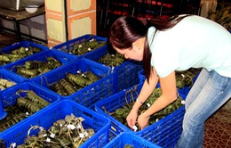 Tặng gần 1 vạn bánh chưng cho người lao động tại Hưng Yên