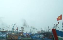 Đà Nẵng: Âu thuyền Thọ Quang quá tải vì tàu thuyền trú bão số 3