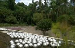 Bảo tàng thiên nhiên ngoài trời lớn nhất thế giới mở cửa đón khách