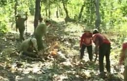 Nhiều tháng không lương vẫn quyết tâm bảo vệ rừng