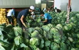 Cần Thơ mở rộng sản xuất và tiêu thụ sản phẩm nông nghiệp sạch