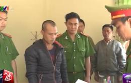 Bắt tạm giam đối tượng phá rừng thông ở Lâm Đồng