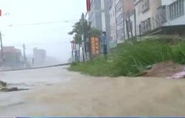 Bão Linfa gây lở đất nghiêm trọng khi đổ bộ vào Trung Quốc