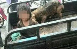 Rúng động vụ bé trai 7 tuổi sống trong chuồng heo tại Trung Quốc