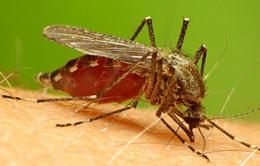 Xét nghiệm hơi thở chẩn đoán bệnh sốt rét