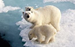 Biến đổi khí hậu và hệ quả 'không thể tin nổi'