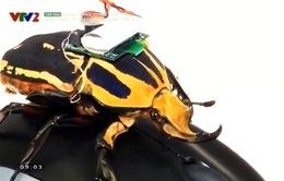 Bọ cánh cứng hỗ trợ giải cứu nạn nhân trong thiên tai