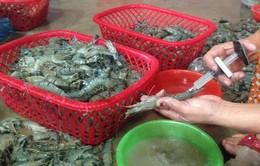 Phát hiện hai cơ sở chế biến thực phẩm bơm tạp chất vào tôm