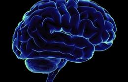 Não của con người không thể phân biệt giới tính rõ ràng