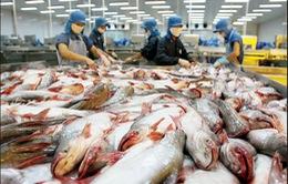 Chưa áp dụng quy định về tỷ lệ mạ băng cá tra xuất khẩu