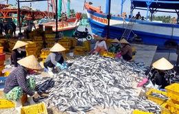 Xây dựng Trung tâm nghề cá lớn tại Hải Phòng