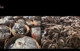 Bà Rịa - Vũng Tàu: Hàng trăm tấn cá nguyên liệu bị ùn ứ