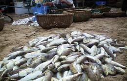 Nghệ An: Kịp thời cứu sống 3 người bị ngộ độc do ăn cá nóc