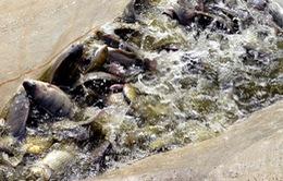 Senegal - Ứng dụng giúp ngư dân cân bằng sản lượng đánh cá
