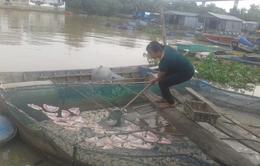 Tiền Giang: Đảo du lịch mất khách vì ô nhiễm do cá chết hàng loạt