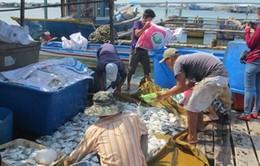 Bà Rịa - Vũng Tàu: Tạm dừng nhà máy xả thải gây chết cá hàng loạt