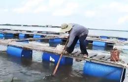 Sớm di dời nhà máy xả thải ô nhiễm gây cá chết hàng loạt