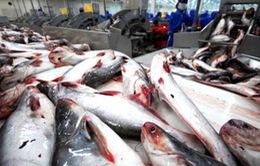DN nội lo ngại quy định cuối cùng đối với cá da trơn Việt Nam